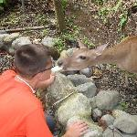 My son feeding a deer a cracker from his mouth at the La Posada.