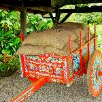 Typical Costa Rican ox cart