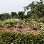 plantage 'tuin'