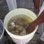 Um maravilhoso balde de ostras frescas