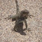 Watch out for the iguana in the pool areas -- very agressive