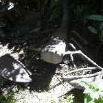 Scrap-metal scorpion in the garden!