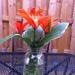 Fresh-picked flower arrangement in the courtyard