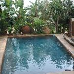 Pool - Mokolodi House