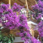 The gardens lovely flowers