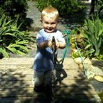 Kolt playing with the hose near the pond