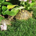 in compagnia di tartarughe nel giardinetto del B&B