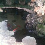 a koya fish pond inside the hotel