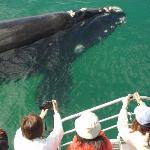 Spectacular Whale Watching May - October - Albany, Western Australia