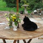 Their cat on the table in the garden