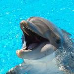 Delfin im Secret Garden