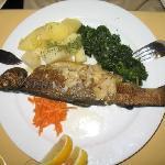 Plain sautéed trout