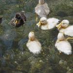 Beim Füttern der Enten am Bach