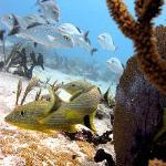 plongée (photo Scuba Caribe achetée)