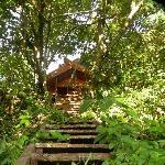 Tree house accommodation, facing towards the ocean