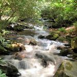 Creek at site 52