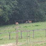 wild deer in the field beyond