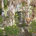 garden of wierdness