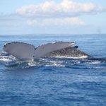 Goodbye whale