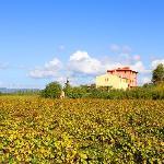 13e eeuwse villa, gelegen tussen de wijngaarden