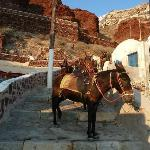 donkeys that can take you from Ammoudi to Oia (the challenging 250 steps back:)