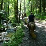 Looking ahead on Sugarlands creekside trail
