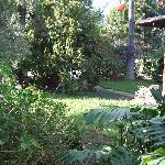 Lucious greenery