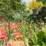beautiful wildlife-friendly planting