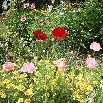Beautifully kept gardens