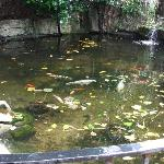Fish Pond at hotel