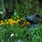 Front Gardens and our bear