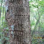 sap sucker woodpecker feeding area