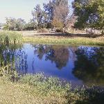 Pond - Lavender Cottage