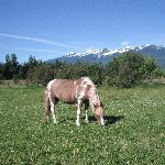 Our pony Minny