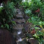 Waterfall in the tropical gardens