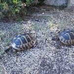 turtles on monastery island