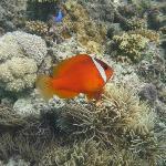 Soooo many Nemos!