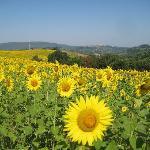 Vibrant Tuscania