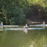 Rowers passing by
