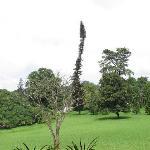 Royal Botanical Gardens Photo