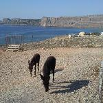 the donkeys on way to lindos town