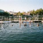 The swimming hole at Dolphins Plus