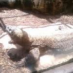 reptile area