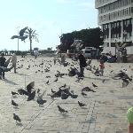 Play with pigeons...