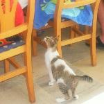 chat arpentant le restaurant l'Olivier en quête de nourriture
