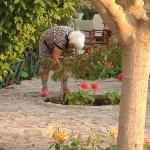 Owners 93 year old mother in garden