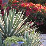 Que de beaux jardins de fleurs