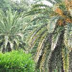 Au milieu des palmiers