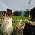 Feeding the animals on the farm tour