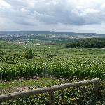 Overciew of vineyards